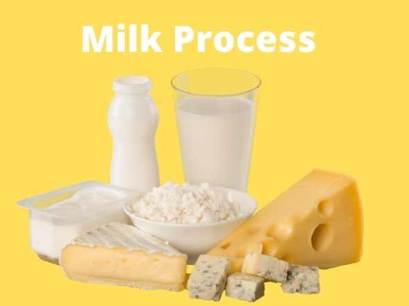 milk Process