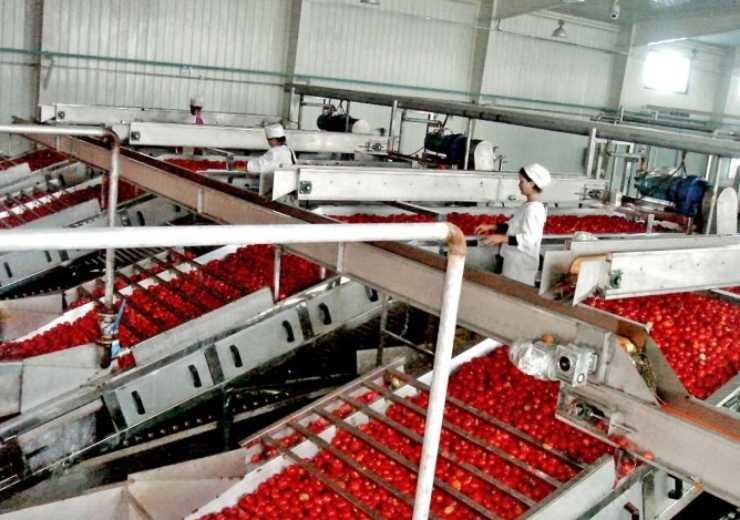 tomato sorting machine